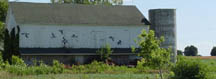 Wild geese on a barn mural outside Mayville
